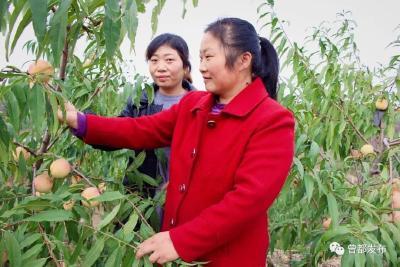 曾都区何店镇桃园姐妹创业种出优质冬桃