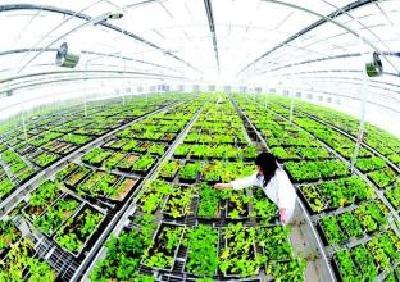 我市8家农业企业被认定为国家和省级重点龙头企业