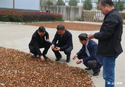 市人大副主任刘泽富调研油茶加工企业