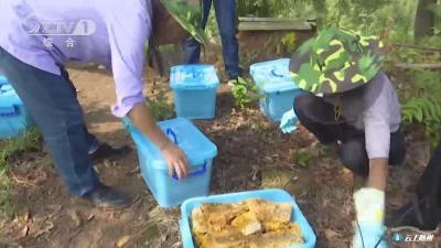 桐桥畈村:发展绿色生态农业 助力脱贫攻坚