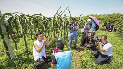 """湖北启动""""村播计划"""" 计划明年培育二百名网红新农人"""