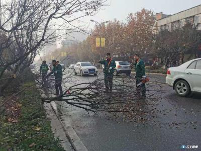 绿化管理处闻情即动 组织工作人员对市烈山大道 北端花坛小乔木进行全面修剪