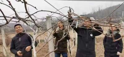 新时代文明实践在随县——万和镇猕猴桃种植技术志愿服务队助力农民致富增收
