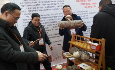 逛展会、尝美食、品菇韵|菇博会上展示了随州香菇的无限可能