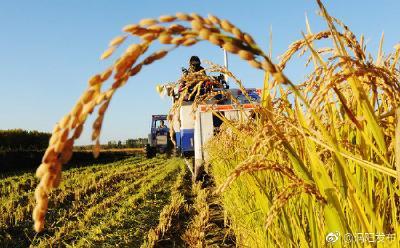 我国农业保险累计支付赔款超2400亿元