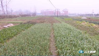 """市场保供兼顾疏通本地蔬菜销售渠道  解决菜农""""卖菜难""""问题"""