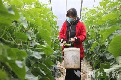 湖北日报丨随州曾都:扶贫产业抢春光