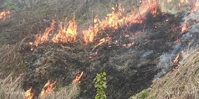我市举行清明节森林防灭火应急救援演练
