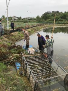 这个地方的贫困户捕捞今年第一季小龙虾