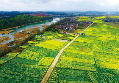 市农业农村局加快推进高标准农田建设