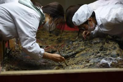 随州枣树林春秋曾国贵族墓地入选2019年度全国十大考古新发现!