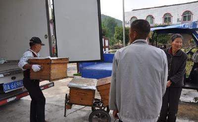 """大洪山:推广蜜蜂养殖 为脱贫致富增""""甜"""""""