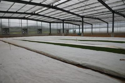 洛阳镇金鸡岭村:稻秧棚里话丰收