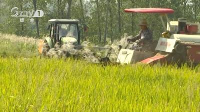V视   农机抢割水稻  多地喜迎丰收