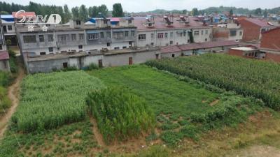 V视 | 《清廉随州》乱占耕地建房 10人被问责