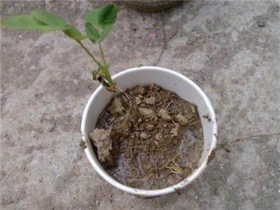 盆栽养护:太神奇,一个矿泉水瓶,丢个枝条进去,不用管就长出一盆花!