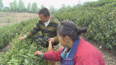 广水南界村:扶贫先扶志 产业助脱贫