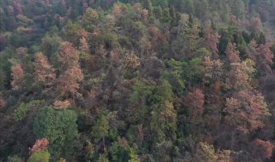 防治森林病虫 守护绿色家园