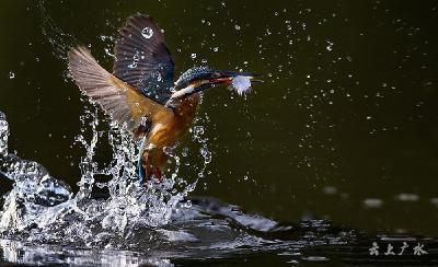 每个瞬间不可错过 美到极致的鸟图