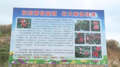 杨寨猫山村:特色产业助脱贫