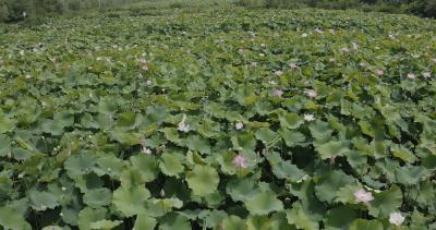 【视频】美丽乡村|杨寨丁湾—赏花游玩正当时