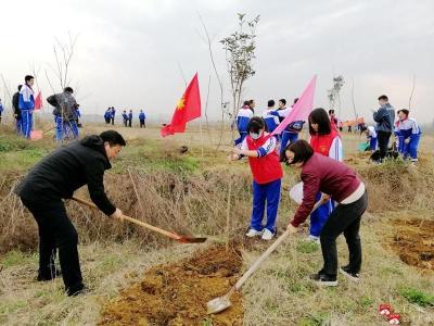 市實驗初級中學:義務植樹   綠化鄉村