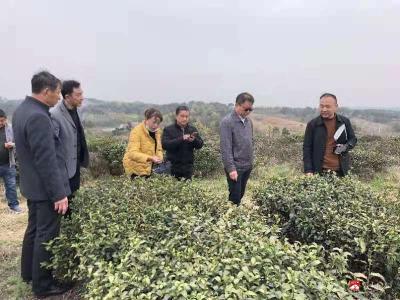 馬坪鎮:打造兩大集體產業  扎實推進鄉村振興