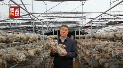帅气!随县县委书记、县长陈兴旺为随县香菇代言