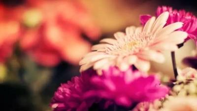 【静读】夷陵电视台首任男主播倾情诵读——《生命是一树花开》