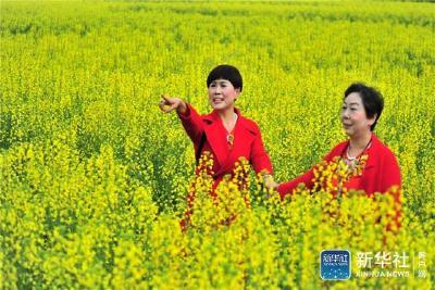 新华社:湖北宜昌   油菜花开迎客来