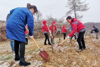 百里荒景区与分乡镇共同举办植树活动