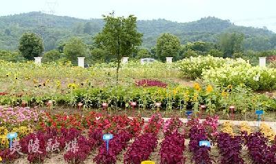 夏日花园里的彩色生活