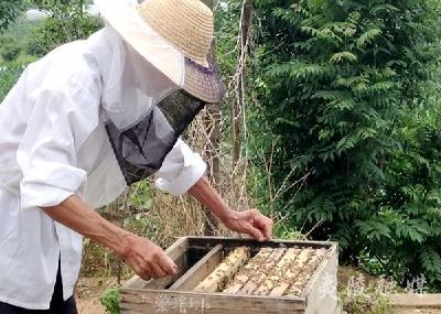 七旬农民带领乡亲发展养蜂业助力增收