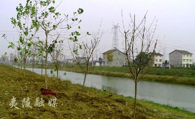 鸦鹊岭镇:打造美丽河道 改善人居环境