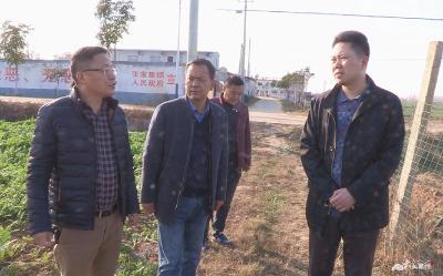 黄进调研张家集镇农业产业化工作