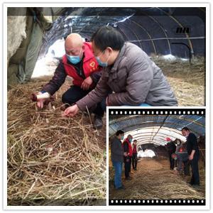 区农技中心指导帮扶村大球盖菇生产