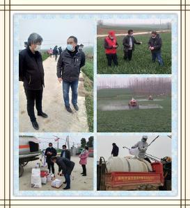 黄朝炎同志到襄州调查小麦条锈病防控