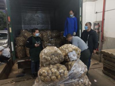 万千小土豆奔赴永辉! 襄州区供销社扩建农产品销售平台
