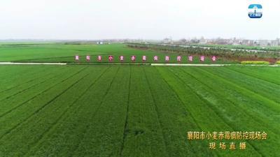 襄州区参加全市小麦赤霉病防控工作现场会