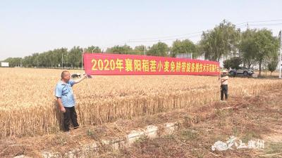 小麦免耕条播 农户一亩地多收入160元