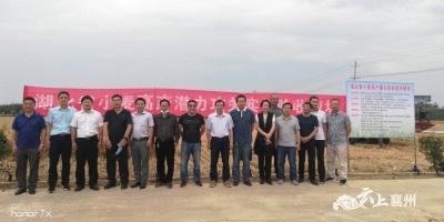 襄州小麦单产再创湖北新纪录