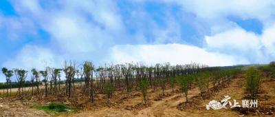 襄州区加快推进鄂北水资源配置生态防护林建设