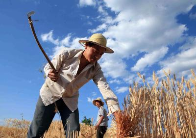 中共湖北省委 湖北省人民政府 致全省农民朋友的一封信