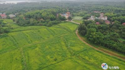 """咸安:当好土地""""保姆"""",多产业发展助农增收"""