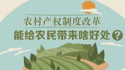 稳步推进农村集体产权制度改革