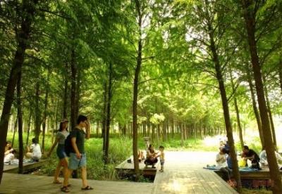 森林城市人人参与 美好生态家家收益