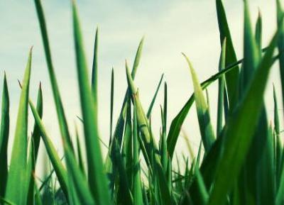 美国研究发现:植物也有痛感 可向同伴传递警告