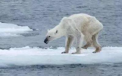 """科普贴!全球变暖,这些""""冷""""知识你必须get到"""