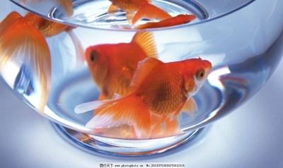 金鱼能检测出茶叶中的农残?