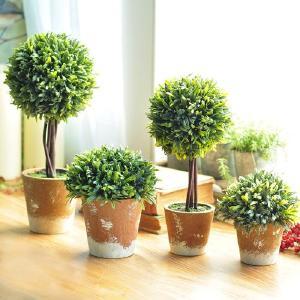 净化空气,种这些盆栽有奇效